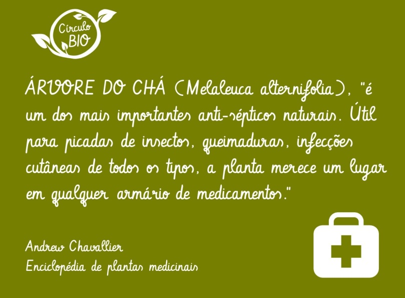 arvoredocha_aromaterapia_circulobio